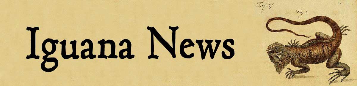 Iguana News header image